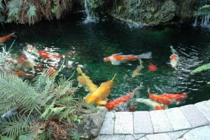 koi-pond-protection-i13